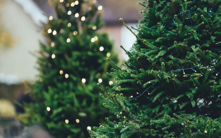 Green Christmas trees